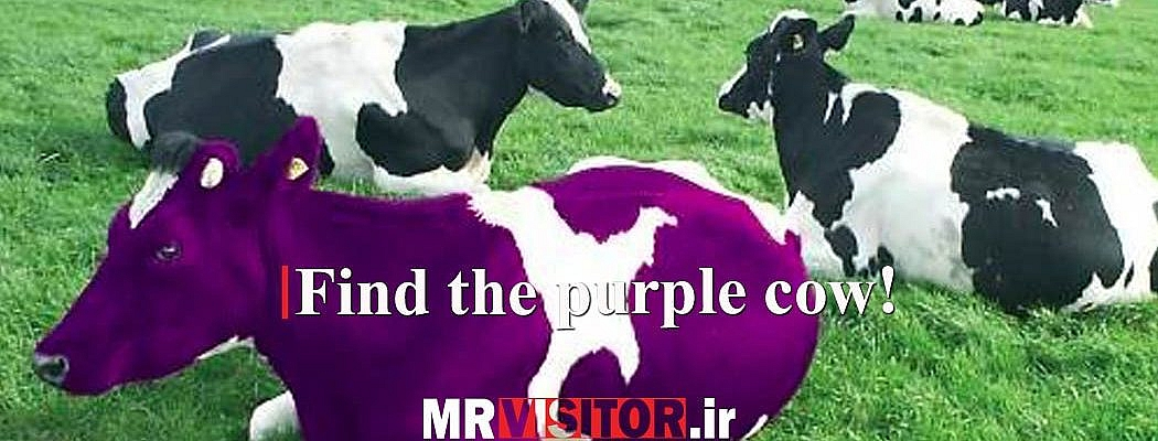 Find the purple cow!